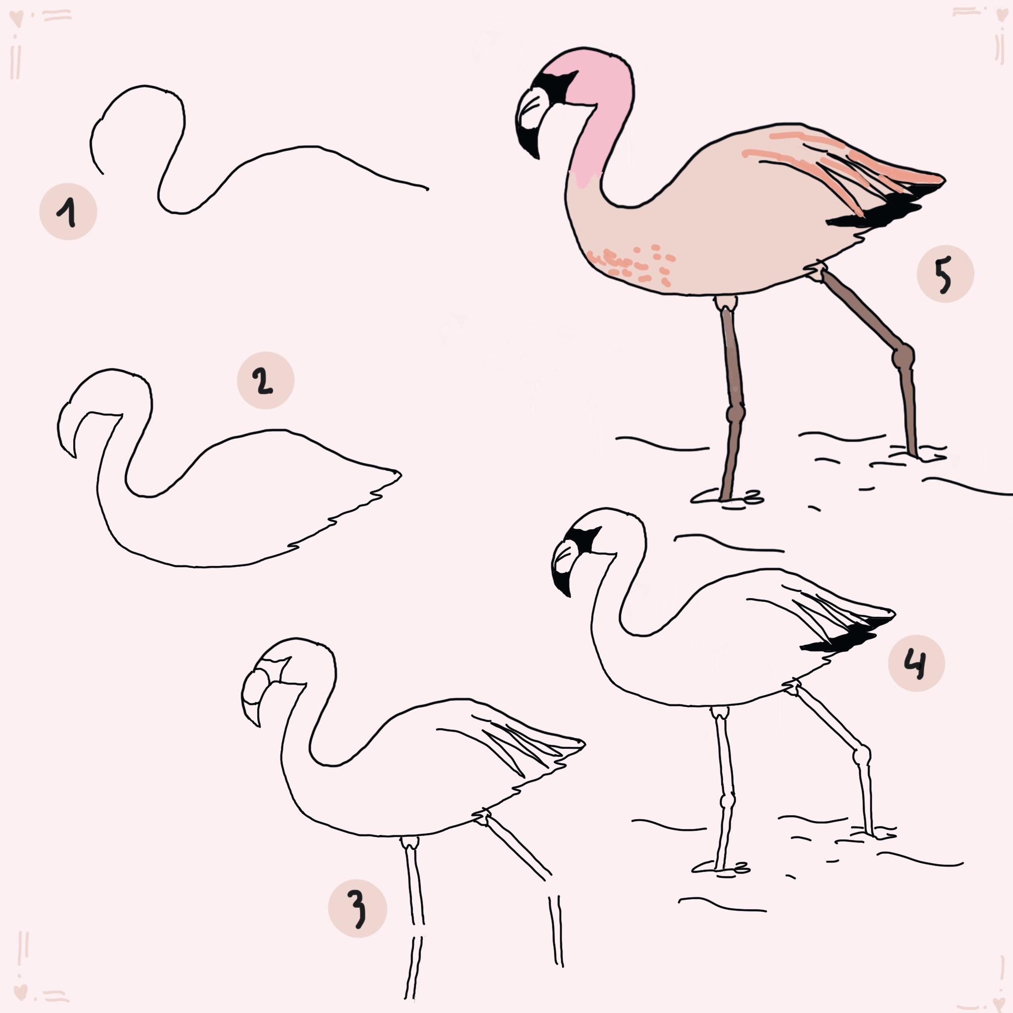 Flamingo Malvorlage Malvorlagen Bilder Zum Ausmalen Vorlagen 0